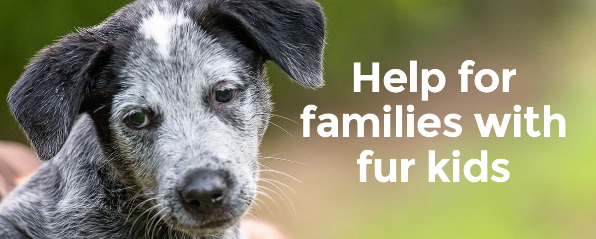 Help for families with fur kids