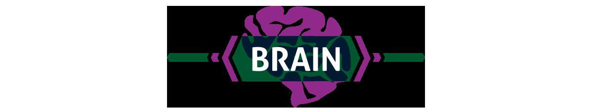 Brain (image)