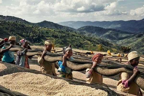 sonnengetrockneter kaffee in ruanda