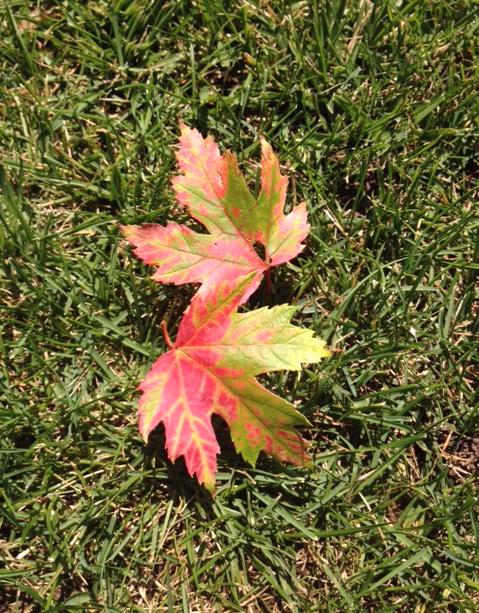 Image of leaf