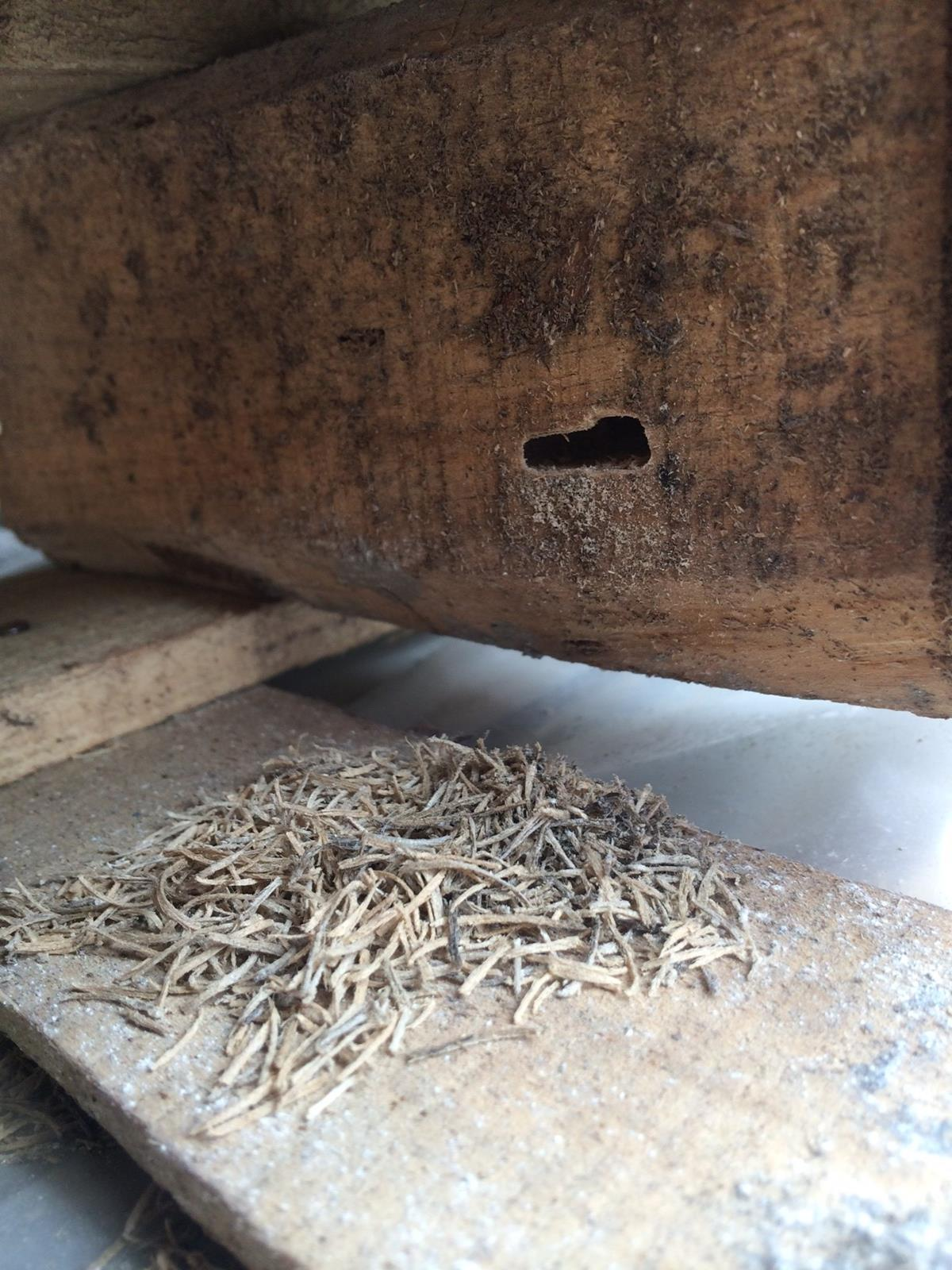 Evidence of live insect activity in wooden packaging material in imported freight intercepted by Forestry Commission Plant Health Service inspectors this year