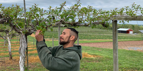 Penn State Extension marks milestone in outreach to Spanish-speaking growers