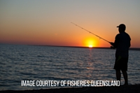 Image courtesy of Qld Fisheries