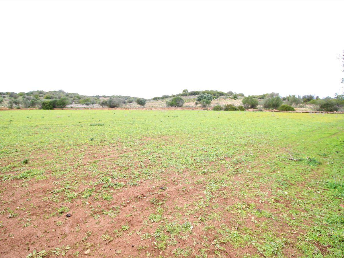 IDH8637-landforsaleportimao-portugalproperty-investmentopportunityalgarve