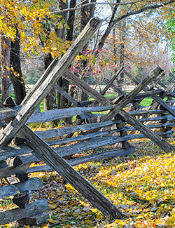 Fall Scene at Ferry Farm