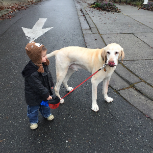 Hank's New Dog Walker!