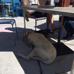 Hank found a family with shade