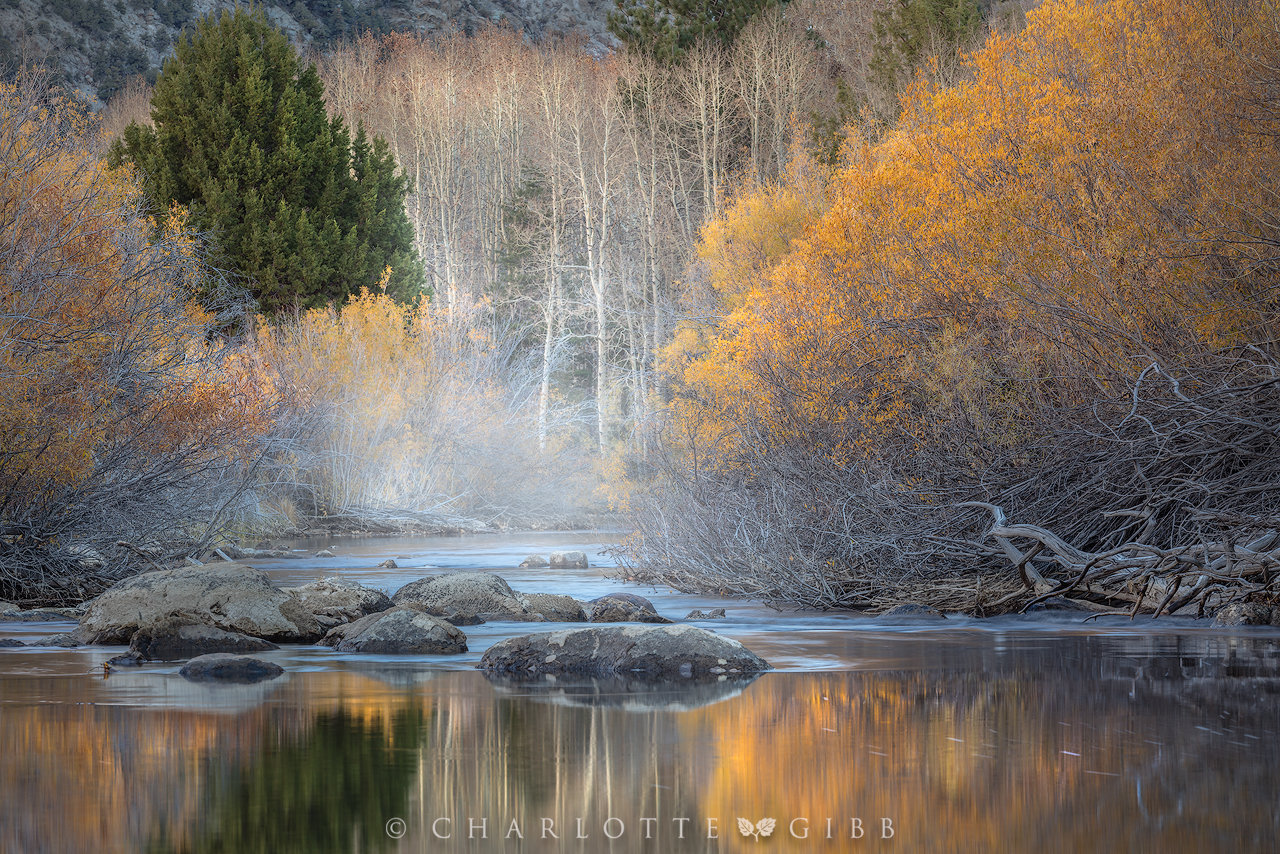 6 Highly Effective Tips for Fall Photography