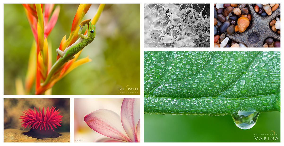 Macro Photography: Gear, Creativity and More!