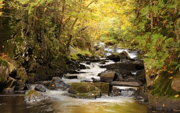 Tyler Forks River. Photo by Joel Austin.