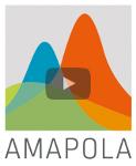 Vidéo optimisation Amapola