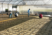 Desert germ room expansion