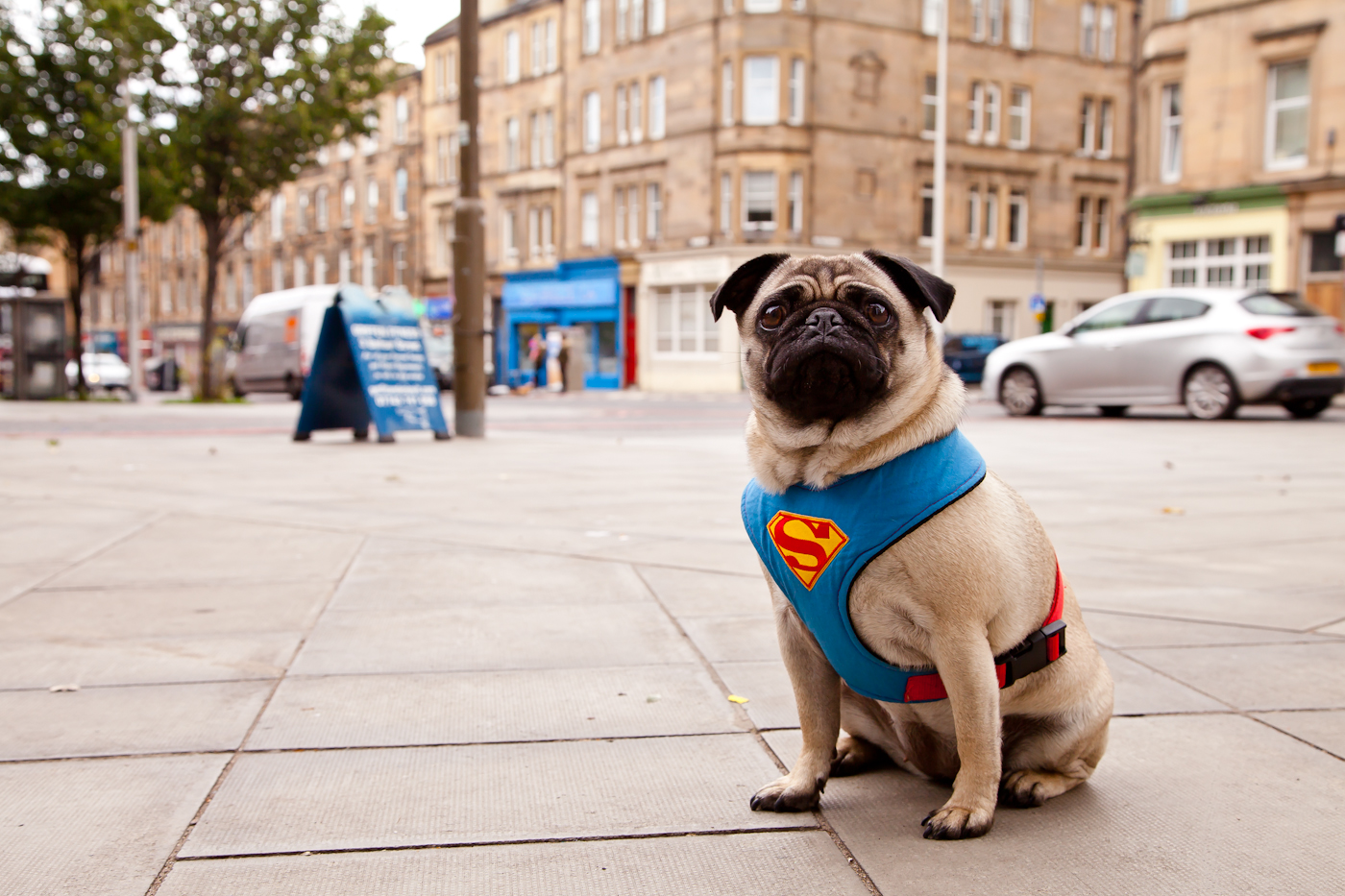 Coco fitness pug on Leith Walk