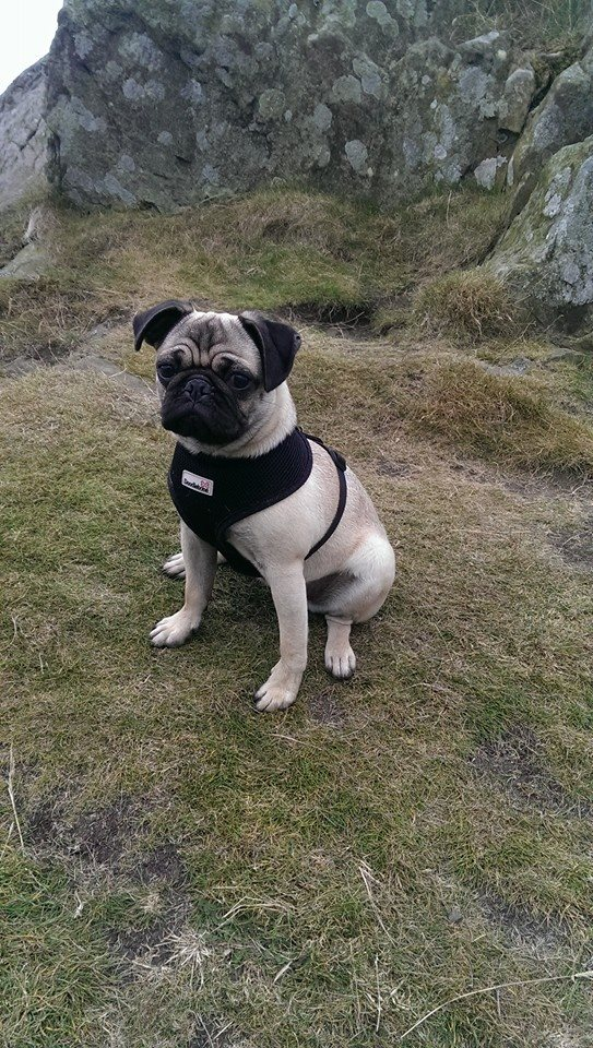 Coco conquers North Berwick Law