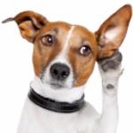 Dog requesting feedback