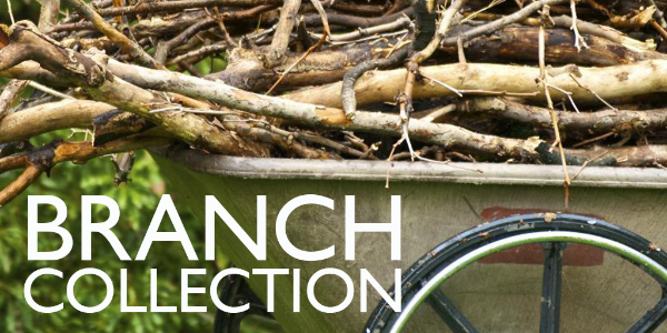 Branch collection