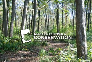 (Photo) A stand of trees in springtime with the NPCA logo & text overlay