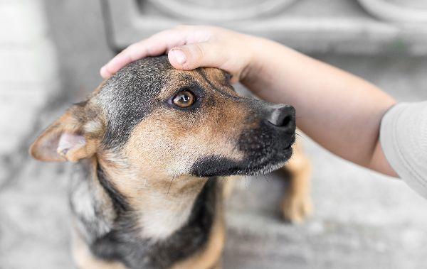 profile image of a dog