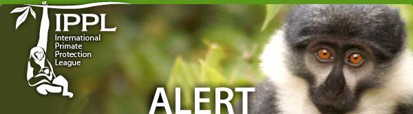 International Primate Protection League