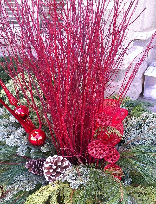 Red dogwood and more is gorgeous!