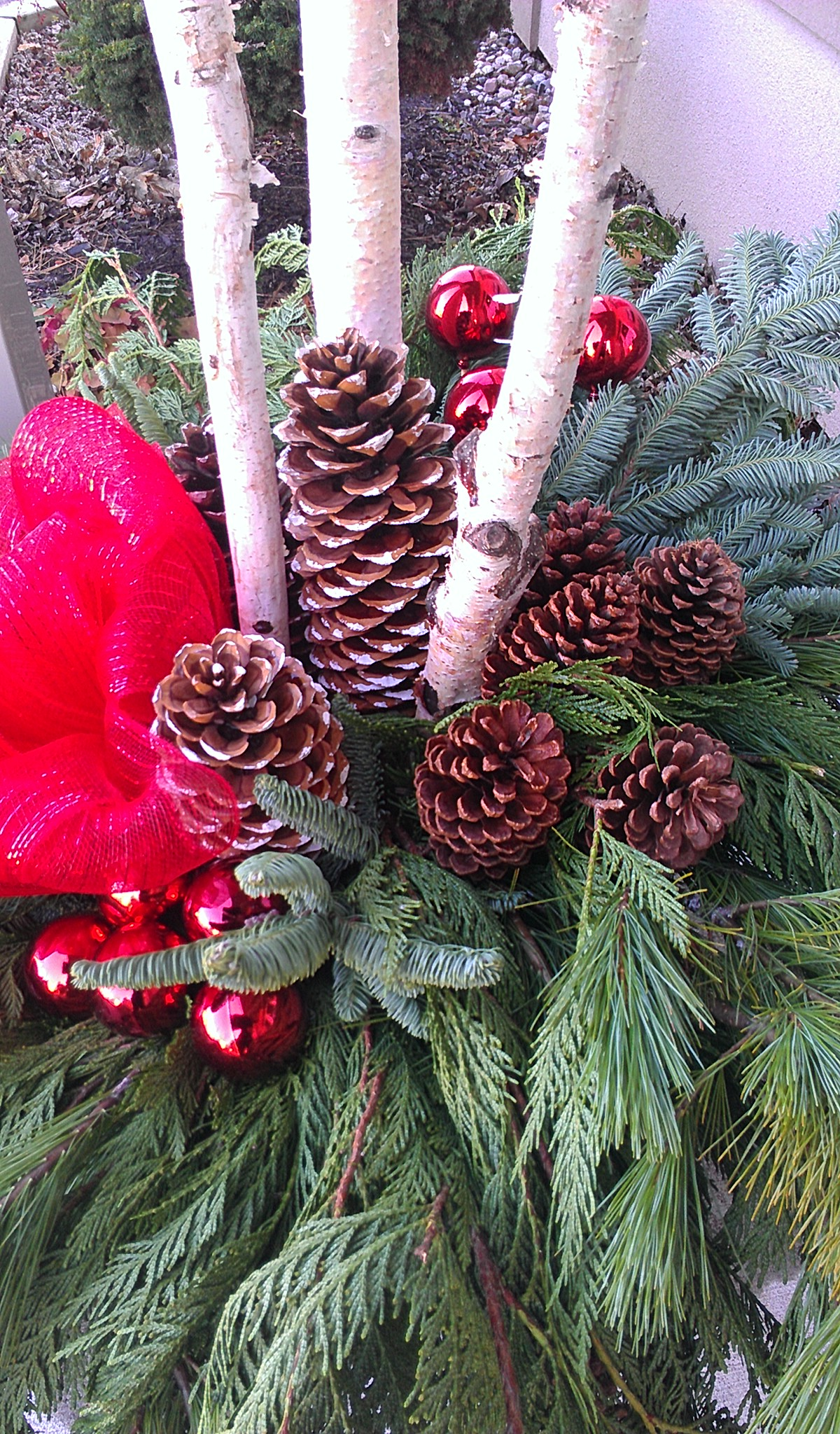 Pine, monster pine cones, and a red bow.