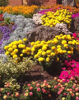 Marigolds, Lantana, Petunias, and more!