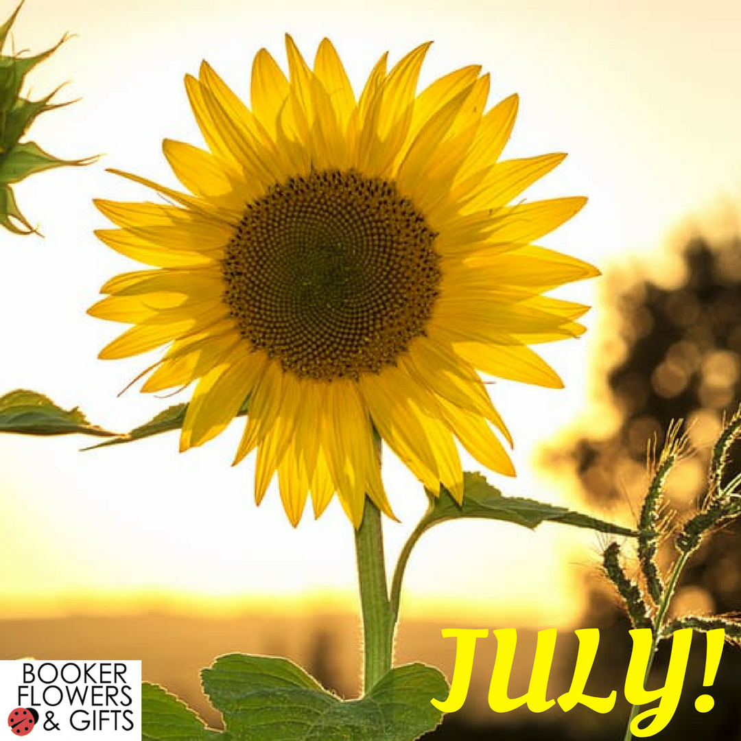 Sunflower Flower of the Month July 2017