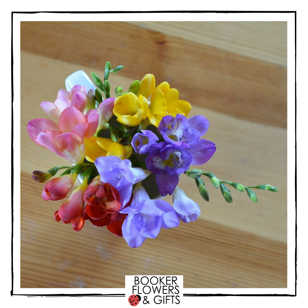 Hello February - flower of the month, Freesia