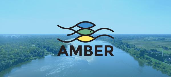 AMBER-Vistula