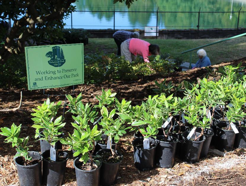 Image: Volunteer Park Restoration