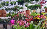 Conservatory Plant Sale Photo