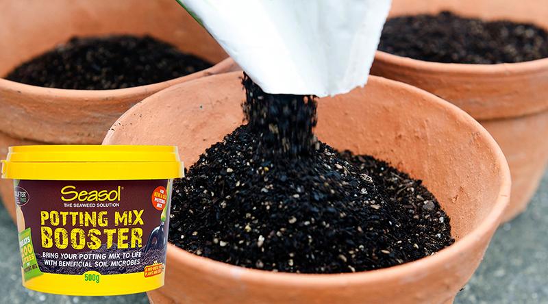 Seasol potting mix booster
