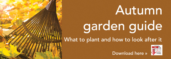 Autumn garden guide
