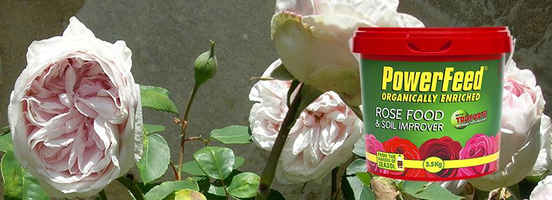 Seasol rose food