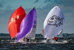 Davis Island J/70 Winter Series III Preview