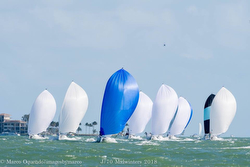J/70s sailing Midwinters
