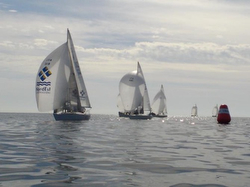 J/24s sailing Italy Nationals