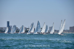 J/70s enjoying Long Beach Race Week