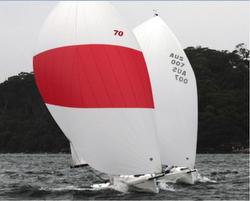 J/70s sailing in Sydney Harbour
