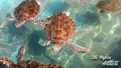 Regata al Sol- Isla Mujeres turtles