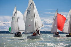 J/24s sailing Hungary- Lake Balaton