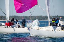 J/24s sailing St Pete NOOD