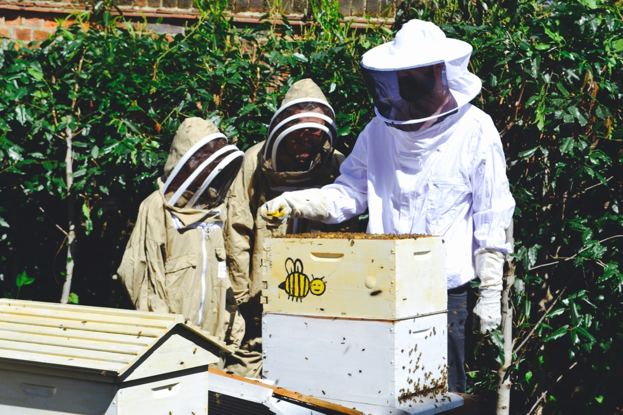 Beekeepers around a hive