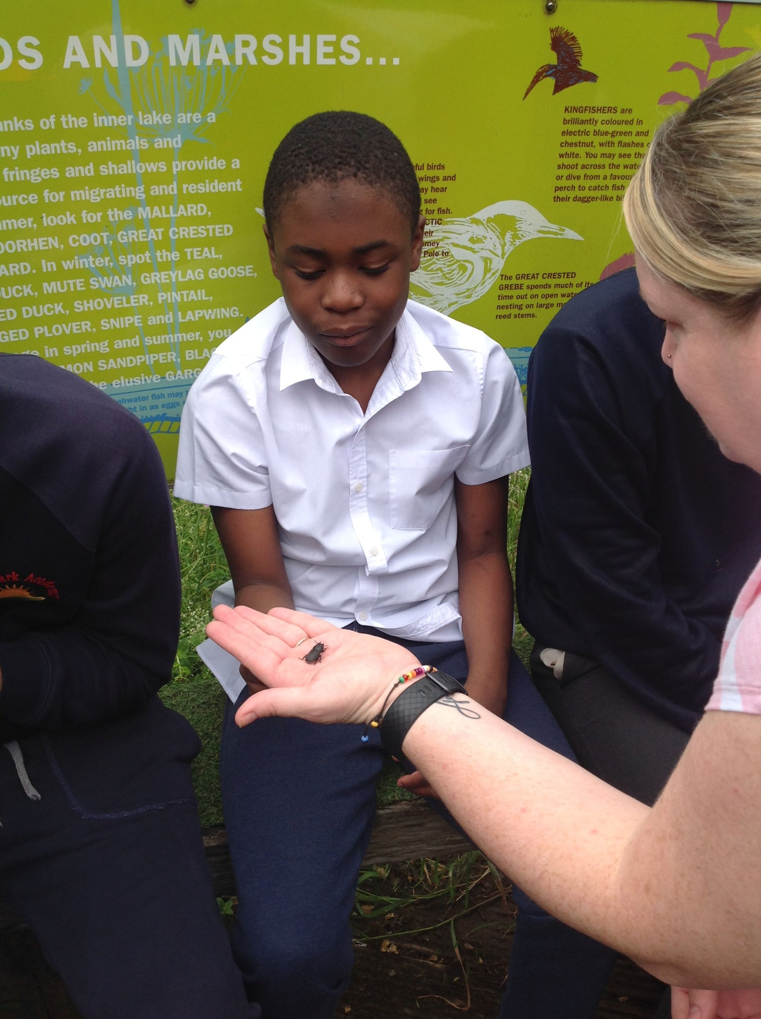 Student looking at an insect in teacher's hand