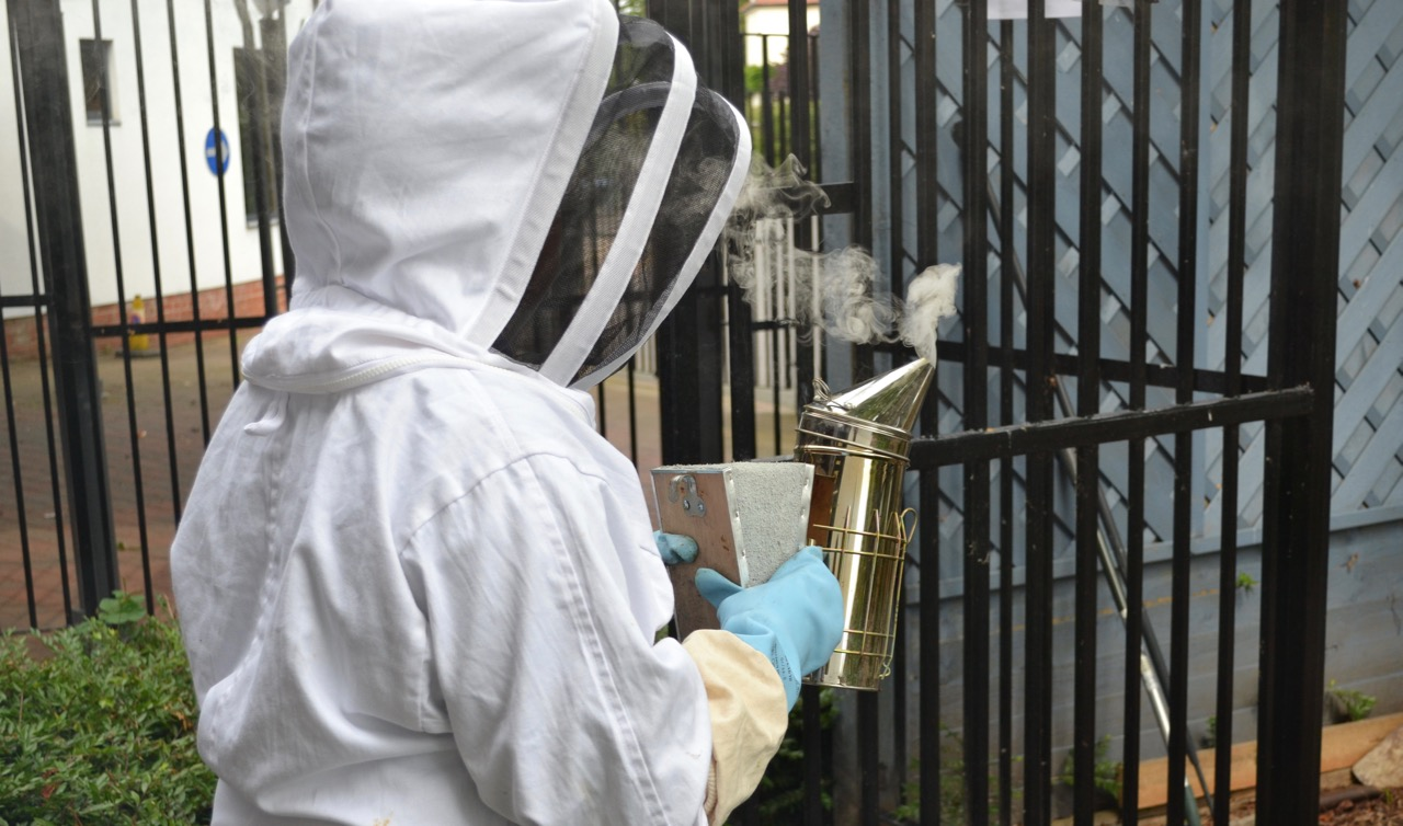 Student beekeeper with smoker for the bees