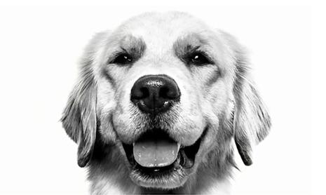 Royal Canin Case Study
