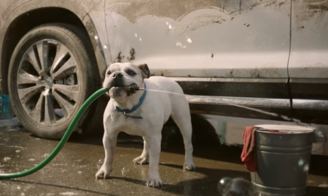 Subaru Dog Tested | Car Wash