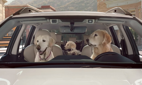 Subaru Dog Tested | Drop Off