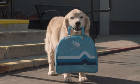 Subaru Dog Tested | Drive Away
