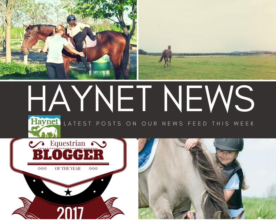 Haynet News